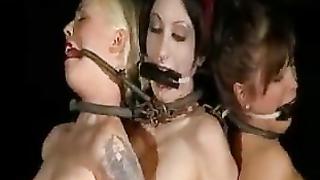 Video insex Insex Porn